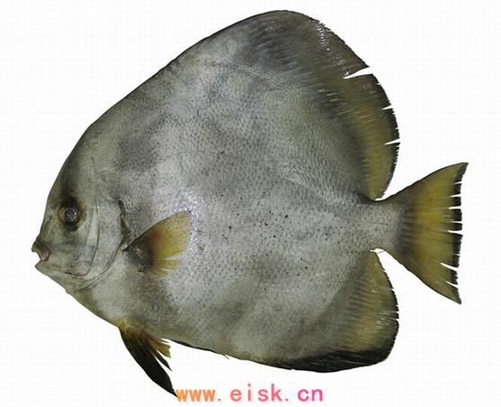 鱼砂石ps素材